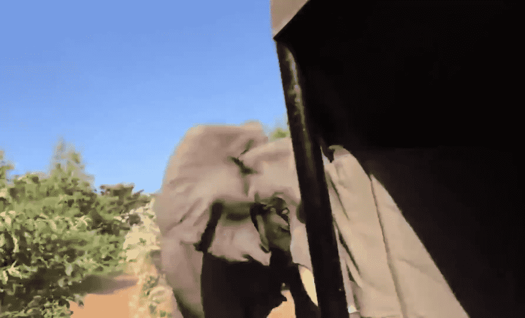 Macintosh HD:Users:brittanyloeffler:Downloads:Upwork:Elephant:17-elephant-ramming-tourists-1024x620.png
