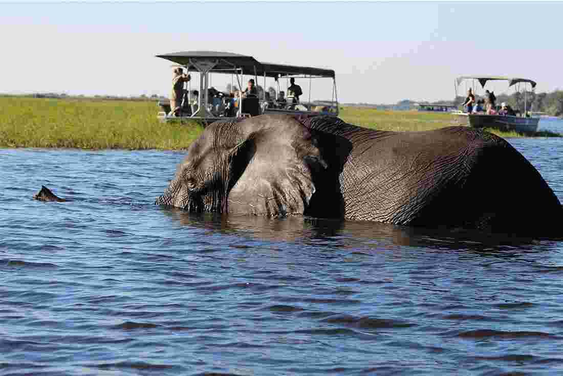 Macintosh HD:Users:brittanyloeffler:Downloads:Upwork:Elephant:Africa-Botswana-elepant-swimming-pax.jpg