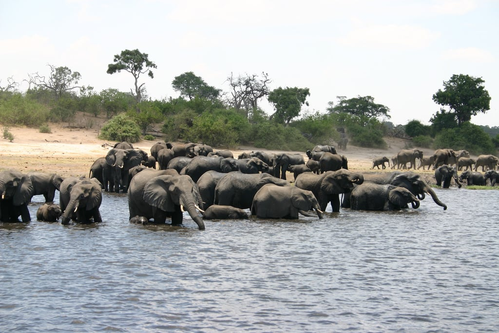 Macintosh HD:Users:brittanyloeffler:Downloads:Upwork:Elephant:02-Elephants-in-Botswana-Chobe-National-Park.jpg