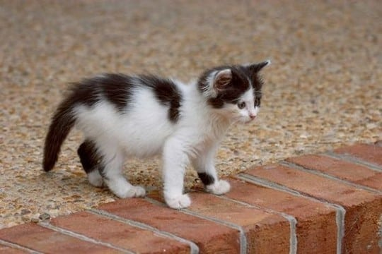 Macintosh HD:Users:brittanyloeffler:Downloads:Upwork:Kittens:kittens33.jpg