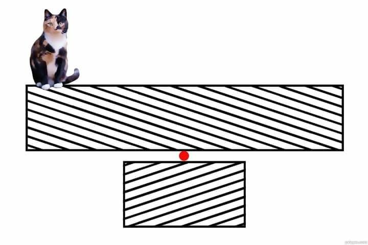 Macintosh HD:Users:brittanyloeffler:Downloads:Upwork:Optical Illusions 2:Kitty-Tilt-502f7a0bb1884_hires.jpg