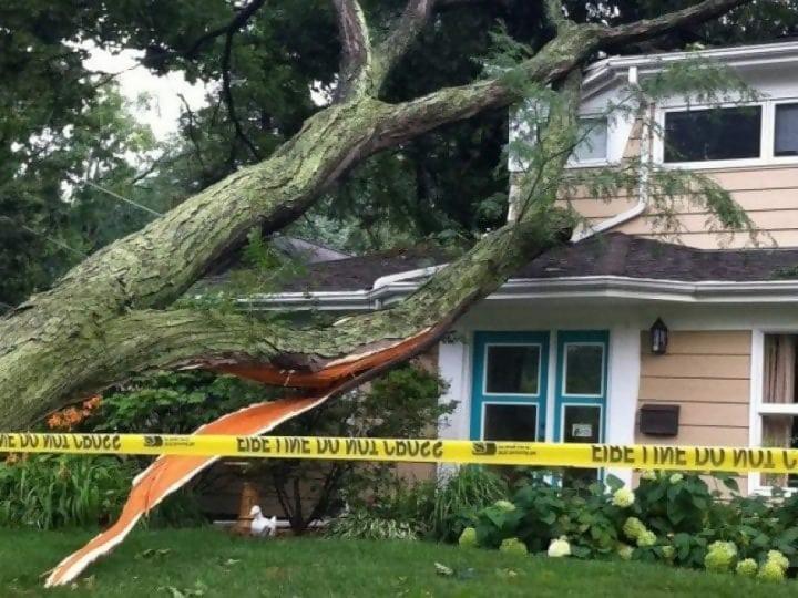 https://cdn.science101.com/wp-content/uploads/2019/01/Tree-falling-over-e1547238659640.jpg