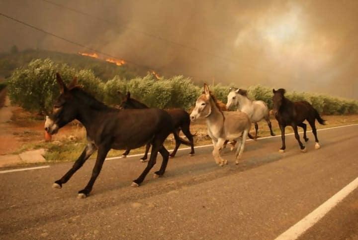 https://cdn.science101.com/wp-content/uploads/2019/01/Animals-flee-wildfire-e1547149557451.jpg