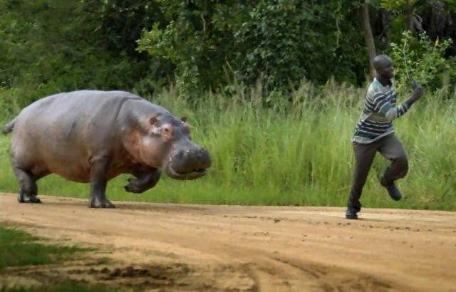Macintosh HD:Users:brittanyloeffler:Downloads:Upwork:Enormous Animals:animal-size-comparison-5.jpg