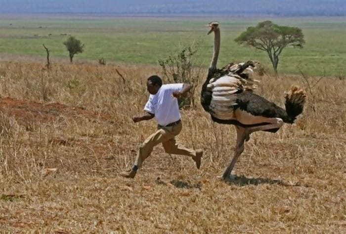 Macintosh HD:Users:brittanyloeffler:Downloads:Upwork:Enormous Animals:animal-size-comparison-14.jpg