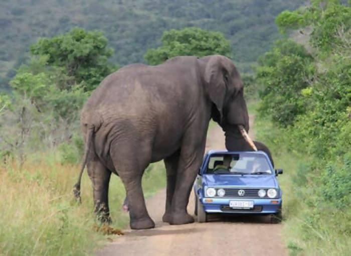 Macintosh HD:Users:brittanyloeffler:Downloads:Upwork:Enormous Animals:animal-size-comparison-24.jpg