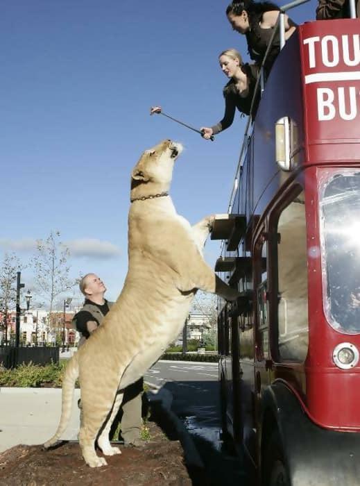 Macintosh HD:Users:brittanyloeffler:Downloads:Upwork:Enormous Animals:animal-size-comparison-26.jpg