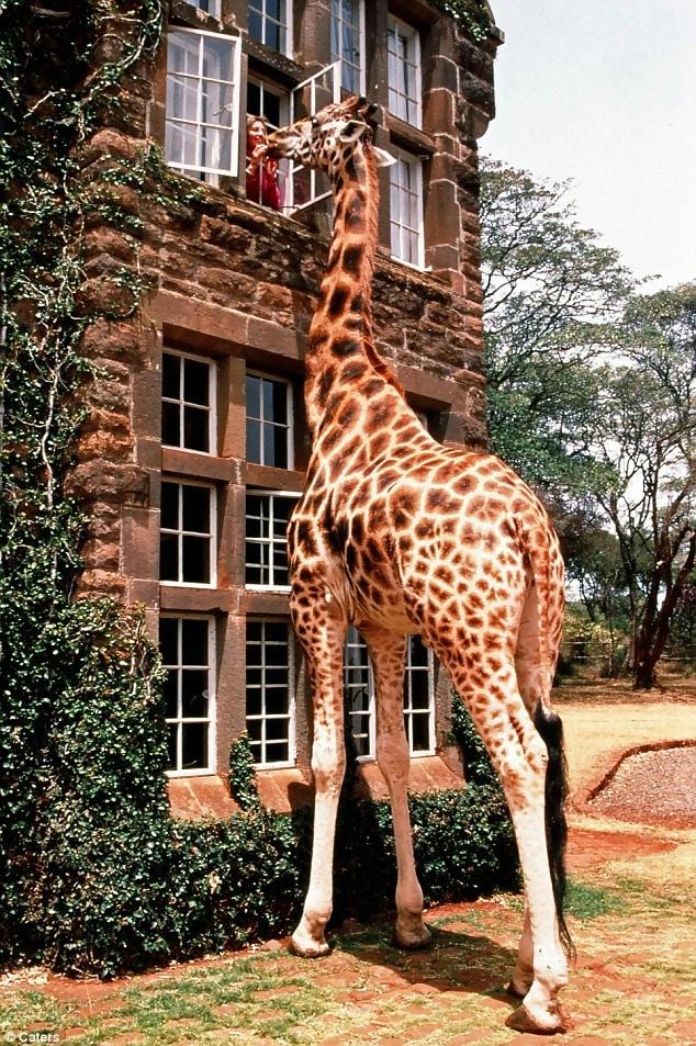 Macintosh HD:Users:brittanyloeffler:Downloads:Upwork:Enormous Animals:animal-size-comparison-31.jpg