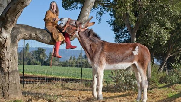 he Friendly 15.3 Hands Donkey
