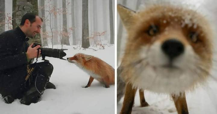 Macintosh HD:Users:rjackson:Desktop:Fox-in-snow-e1545087792193.jpg