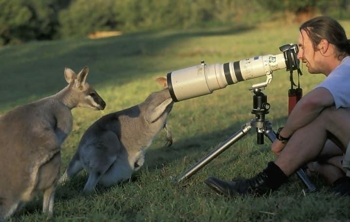 Macintosh HD:Users:rjackson:Desktop:Kangaroos-and-photographer-2.jpg