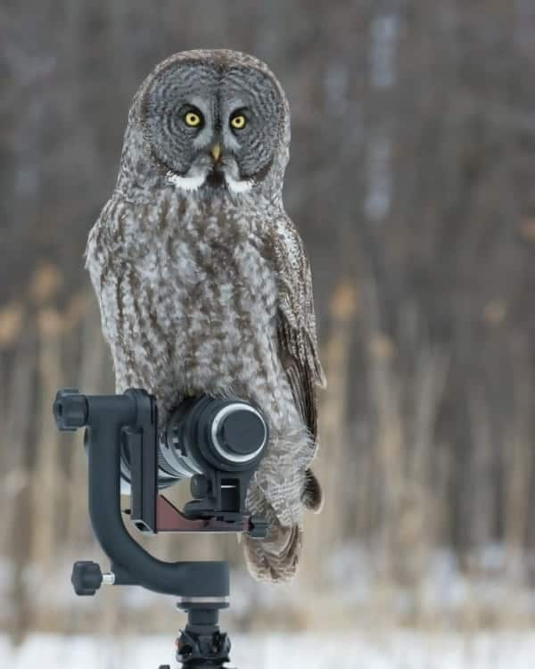 Macintosh HD:Users:rjackson:Desktop:Owl-on-camera-e1545091034895.jpg