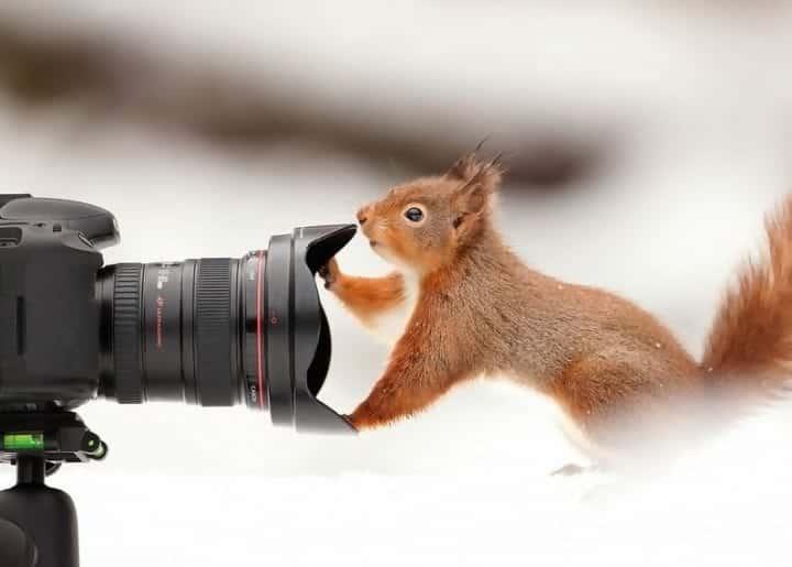 Macintosh HD:Users:rjackson:Desktop:squirrel-and-camera-e1545089682118.jpg