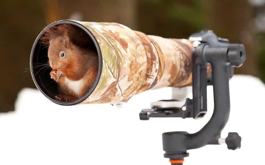 Macintosh HD:Users:rjackson:Desktop:squirrel-camera_2451903k.jpg