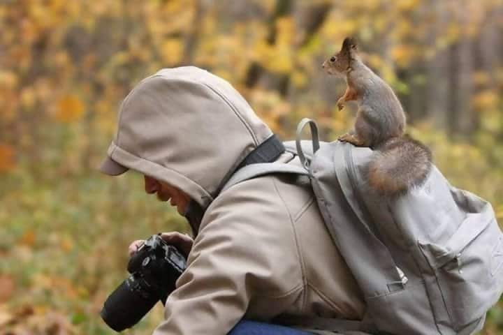 Macintosh HD:Users:rjackson:Desktop:Squirrel-on-backpack-e1545085543433.jpg