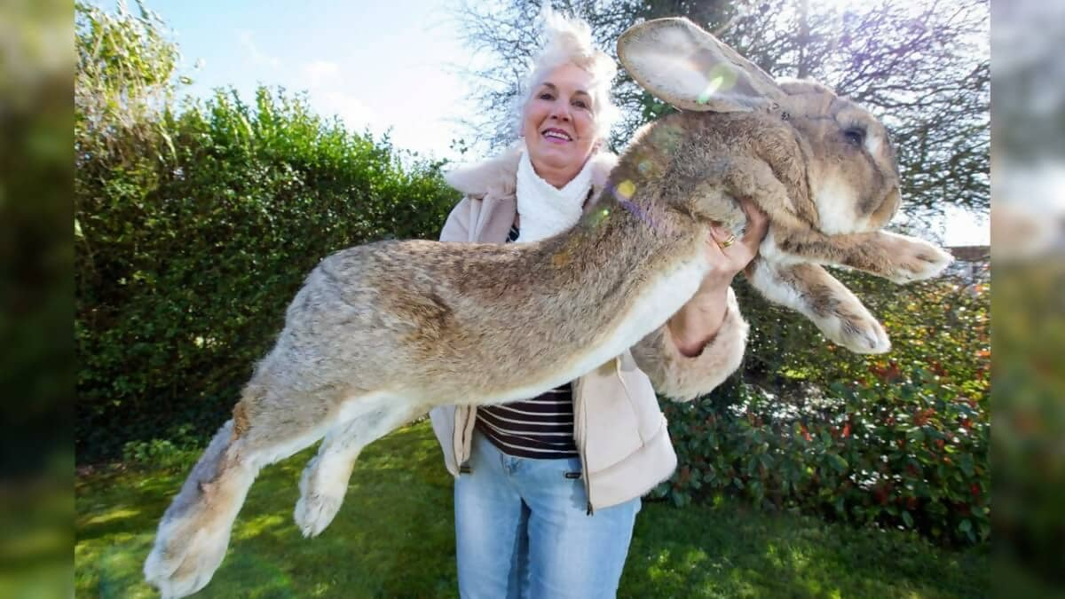 These Giant Animals Actually Exist!? – News