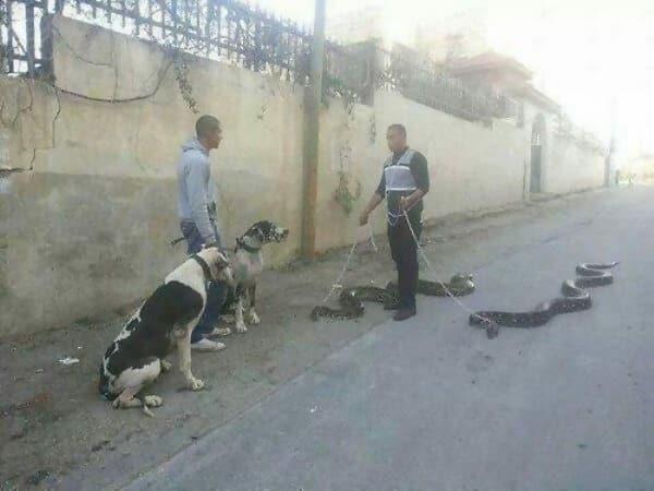 http://www.postfun.com/wp-content/uploads/2018/11/walking-snakes-38865.jpg