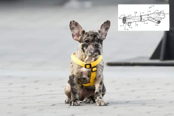 http://www.postfun.com/wp-content/uploads/2018/12/dog-toy-57061.jpg